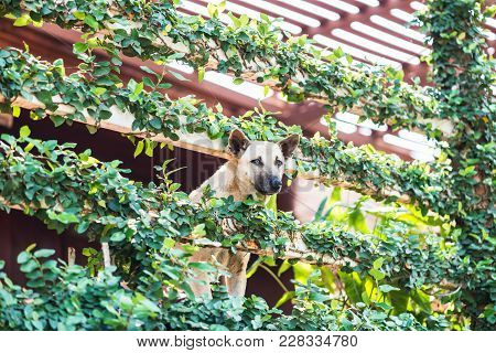 Dogs Take A Look At The Strange House With Tree Cover.