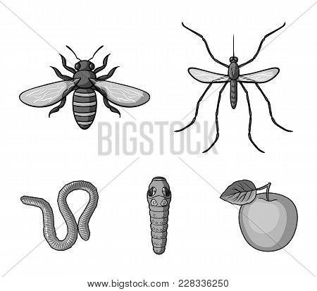 Worm, Centipede, Wasp, Bee, Hornet .insects Set Collection Icons In Monochrome Style Vector Symbol S