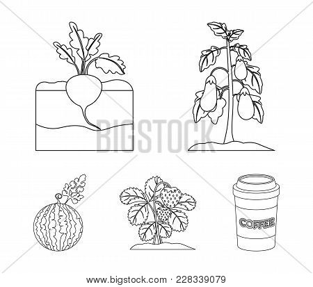 Radish, Strawberry, Watermelon, Eggplant.plant Set Collection Icons In Outline Style Vector Symbol S