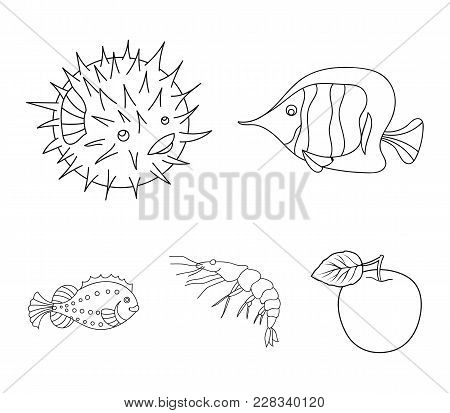 Shrimp, Fish, Hedgehog And Other Species.sea Animals Set Collection Icons In Outline Style Vector Sy