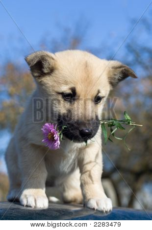 Puppy Dog Hold Flower In Mouth 2