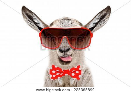 Portrait Of Funny Goat In A Sunglasses And Bow Tie, Showing The Tongue, Isolated On White Background