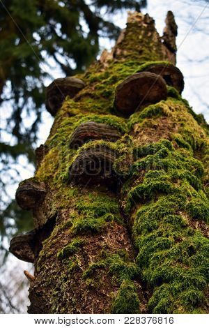 The Moss And The Mushrooms Shroud The Dead Tree In A Mix Of Green And Brown