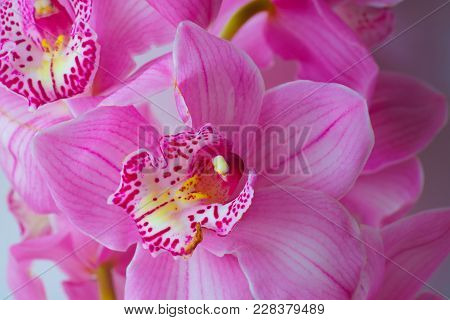 The Orchid Flowers. Beautiful Floral Background For Greeting Cards, Wallpapers, Covers, Phone Screen