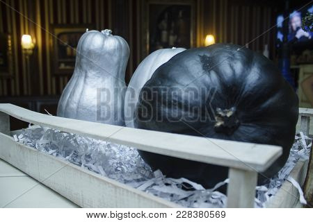 Silvery And Black Pumpkins For The Holiday Of Halloween Are In The Box.