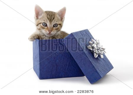 Kitten (5 Weeks) In A Blue Gift Box Isolated On A White