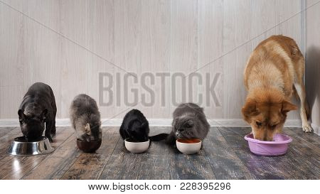 Many Cats Amany Cats And Dogs Eat Pet Food From Bowls