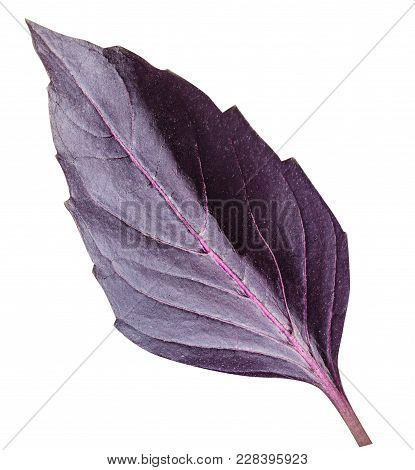 Fresh Red Basil Herb Leaves Isolated On White Background