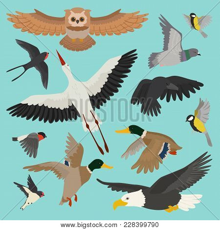 Bird Vector Cartoon Flying Birdie Owl Dove And Duck With Feather Wings Illustration Set Bullfinch St
