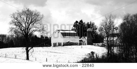 Black And White Farm