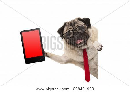 Frolic Business Pug Puppy Dog With Red Tie And Glasses, Holding Up Tablet Phone With Blank Red Scree