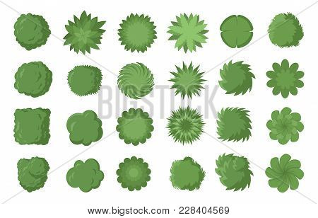 Various Green Trees, Bushes And Shrubs, Top View For Landscape Design Plan. Vector Illustration, Iso