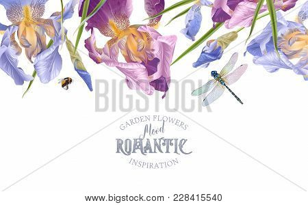 Vector Vintage Botanical Border With Iris Flowers And Dragonfly On White. Floral Design For Natural