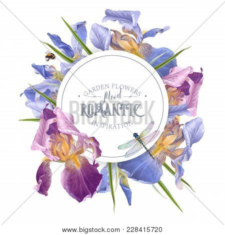 Vector Vintage Botanical Banner With Iris Flowers And Dragonfly On White. Floral Design For Natural