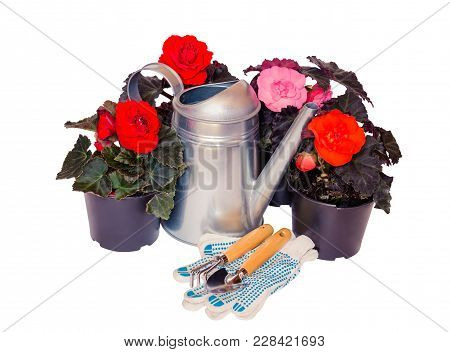 Seedlings Begonia Flowers, Garden Tools And Watering Can Isolated On White Background