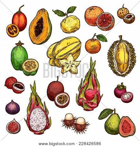 Exotic Fruits Isolated Icons Of Grapefruit, Mandarin And Guava, Papaya Or Figs, Passion Fruit And Dr