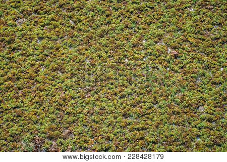 A Picture Of A Swamp, Tina, Duckweed. A Tiny Aquatic Flowering Plant That Floats In Large Quantities
