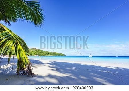 Paradise Beach.white Sand,turquoise Water,palm Trees At Tropical Beach,seychelles 13