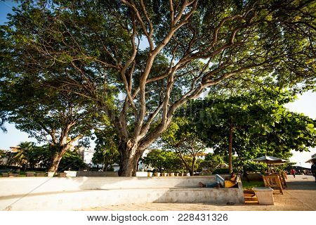 Stone Town, Zanzibar - February 8, 2017:  Large Trees Along The Seafront, With Man Asleep On Step.