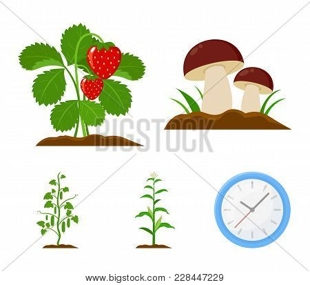 Mushrooms, Strawberries, Corn, Cucumber.plant Set Collection Icons In Cartoon Style Vector Symbol St
