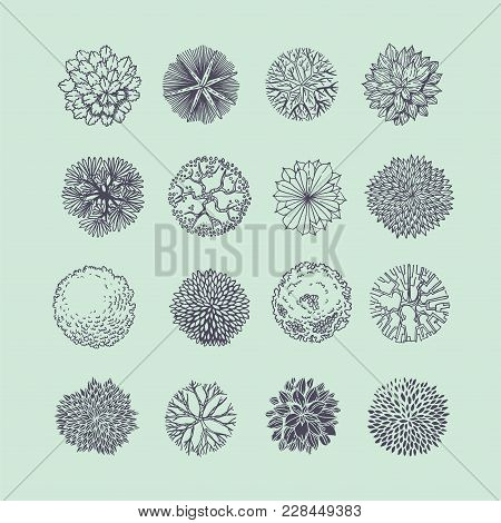 Trees Top View. Different Plants And Trees Vector Set For Architectural Or Landscape Design. View Fr
