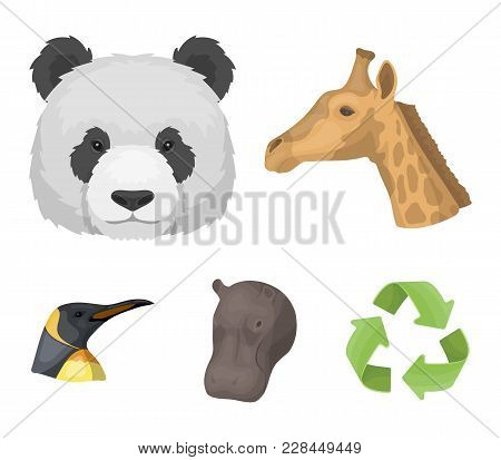 Panda, Giraffe, Hippopotamus, Penguin, Realistic Animals Set Collection Icons In Cartoon Style Vecto