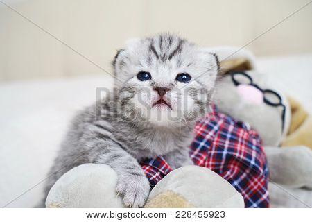 Cute kitten with a toy. Plush tabby kitten. The kitten plays poster