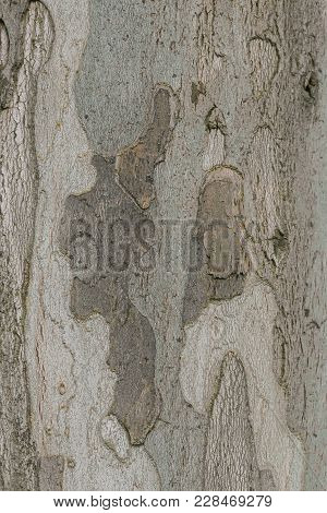 Bark From A Tree, Usable As A Background