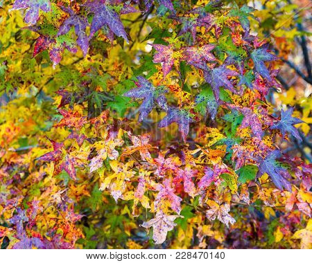 Closeup shot of colorful fall foliage