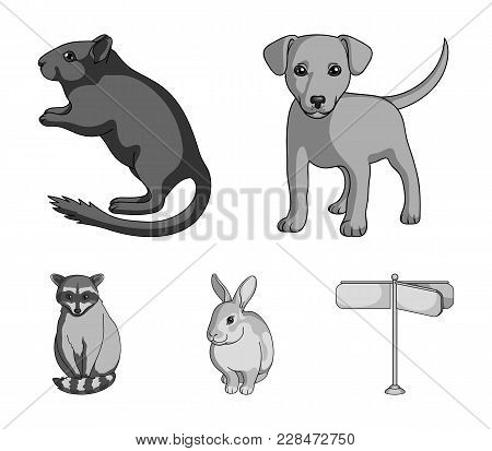 Puppy, Rodent, Rabbit And Other Animal Species.animals Set Collection Icons In Monochrome Style Vect