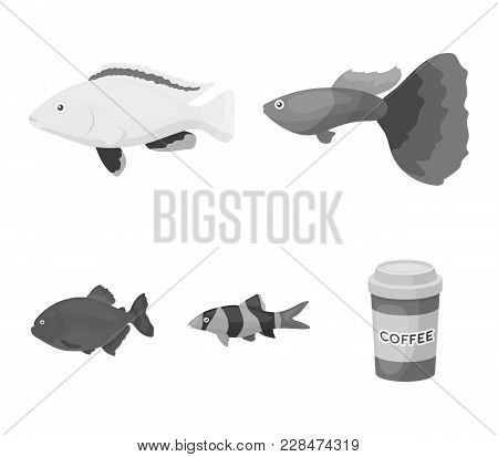 Botia, Clown, Piranha, Cichlid, Hummingbird, Guppy, Fish Set Collection Icons In Monochrome Style Ve
