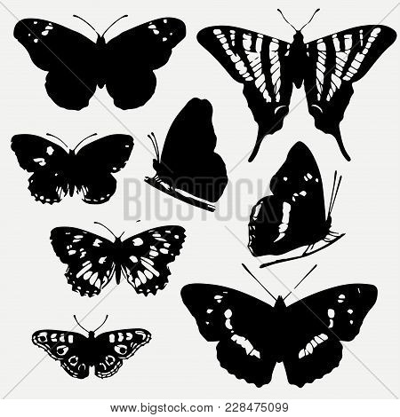 Set Of Butterflies Silhouettes. Butterfly Icons Isolated On Grey Background. Vector Illustration