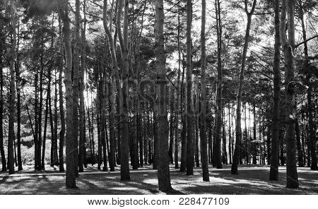 Meadow In Forest In Summer Day Black And White