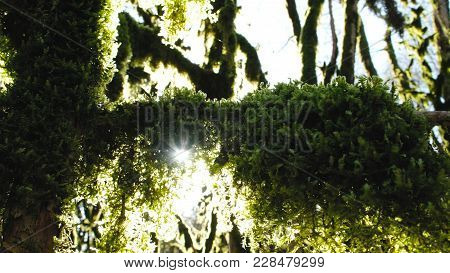 The Rays Of The Sun Are Squid Mossy Branches Of A Tree, 4k.