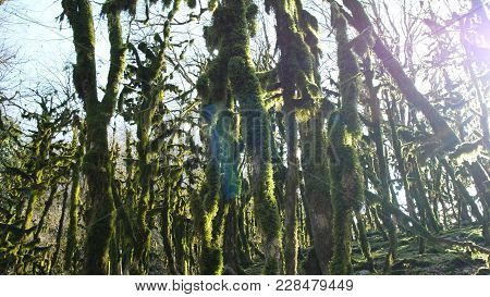 Panorama Of The Mossy Forest, The Sun Shines In The Mysterious Forest, 4k.