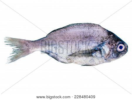 Bream Food Fish Isolated On White Background