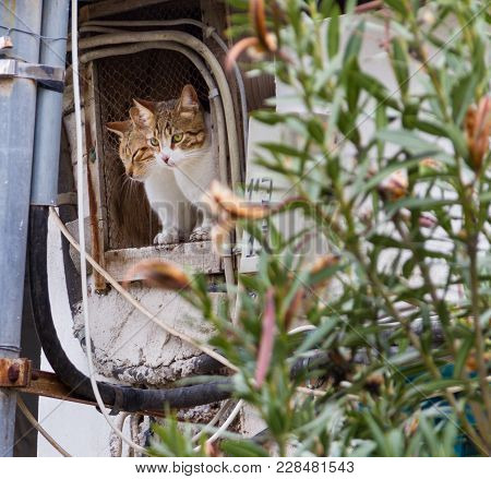 Two Cats Looking Out Of A Derelict House Window