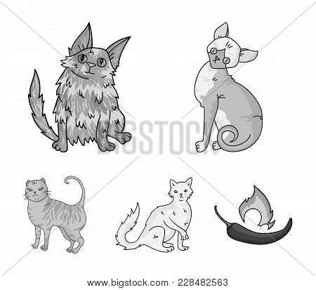 Turkish Angora, British Longhair And Other Species. Cat Breeds Set Collection Icons In Monochrome St