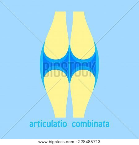 Knee Joint Health Care Icon Flat Biology