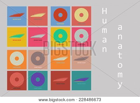 Types muscle tissue vector photo free trial bigstock types of muscle tissue of human body diagram including cardiac skeletal smooth with example of heart ccuart Images