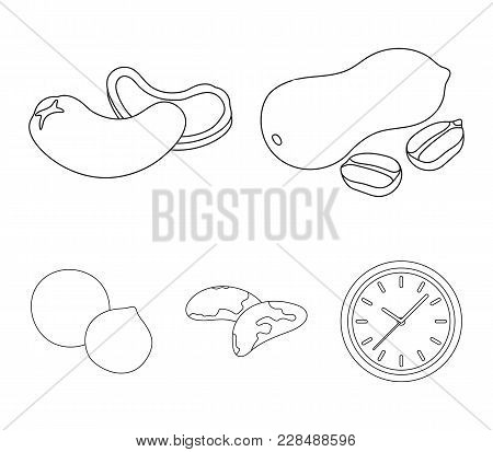 Peanuts, Cashews, Brazil Nuts, Macadamia.different Kinds Of Nuts Set Collection Icons In Outline Sty