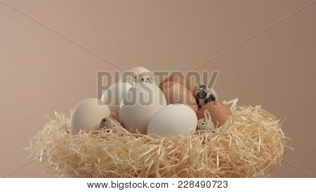 Nest With A Different Eggs Shell. Easter Eggs In Nest