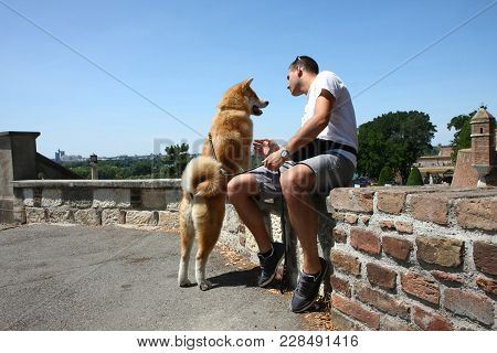 Akita Inu Puppy With Its Owner Enjoying In Public Park