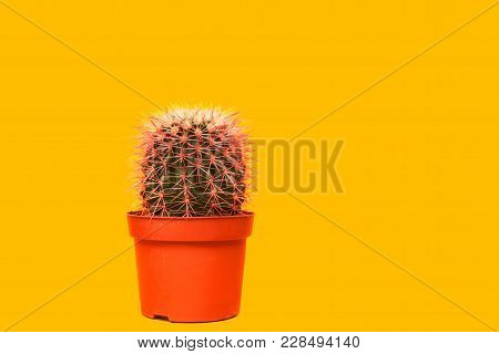 Pink Cactus. Art Gallery Fashion Design. Minimal Stillife. Concept On Yellow Background.