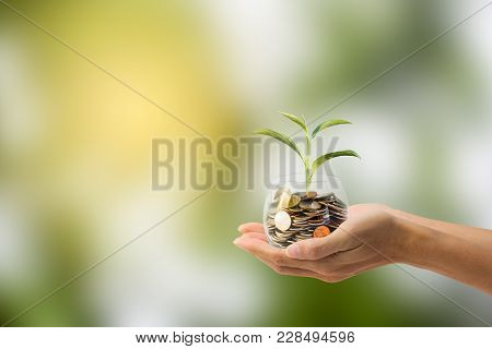 Saving, Investment Concept. Hand Holding Coin In A Glass Jar With Growing Tree With Green Nature As