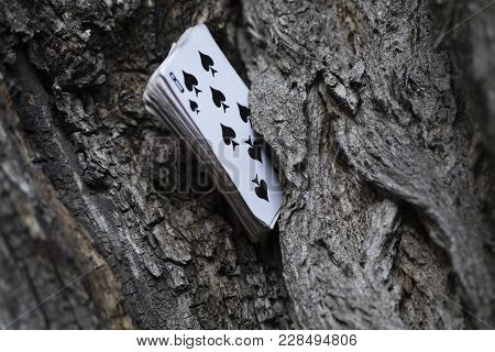 Pack Of Plaing Cards Stick Out From The Crack Of A Ring.