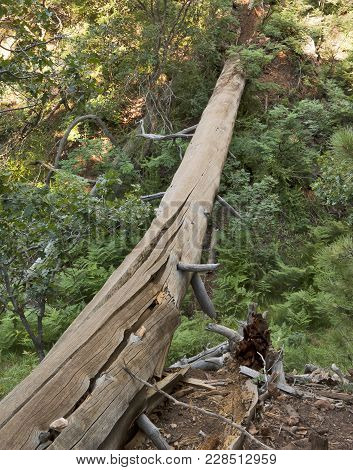 The Dead Trunk Of A Fallen Pine Tree Near The North Rim Of The Grand Canyon In The Kaibab National F