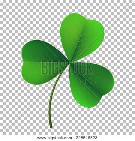 Vector Three-leaf Shamrock Clover Icon. Lucky Fower-leafed Symbol Of Irish Beer Festival St Patrick'