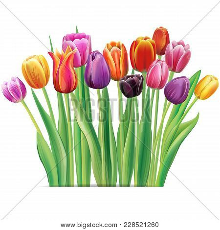 Bouquet Of Multicolor Tulips Isolated Over White Background