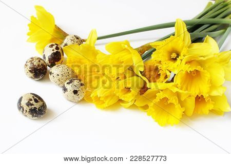 Easter, Spring Greeting Card, Invitation With Quail Eggs And Yellow Daffodils, Narcissus Flowers Lyi